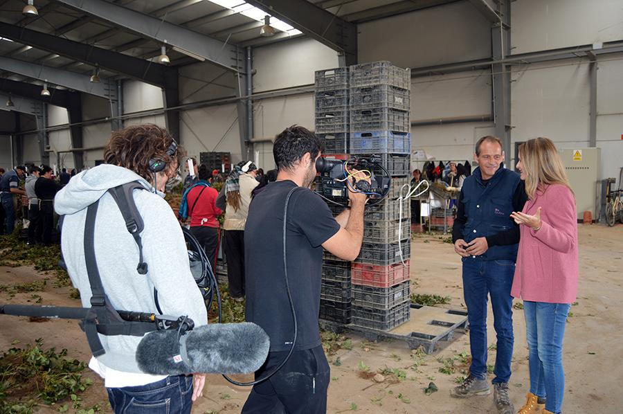 Los viveros de fresa de Grufesa, de cerca en el programa de Televisión Española 'Aquí la Tierra'