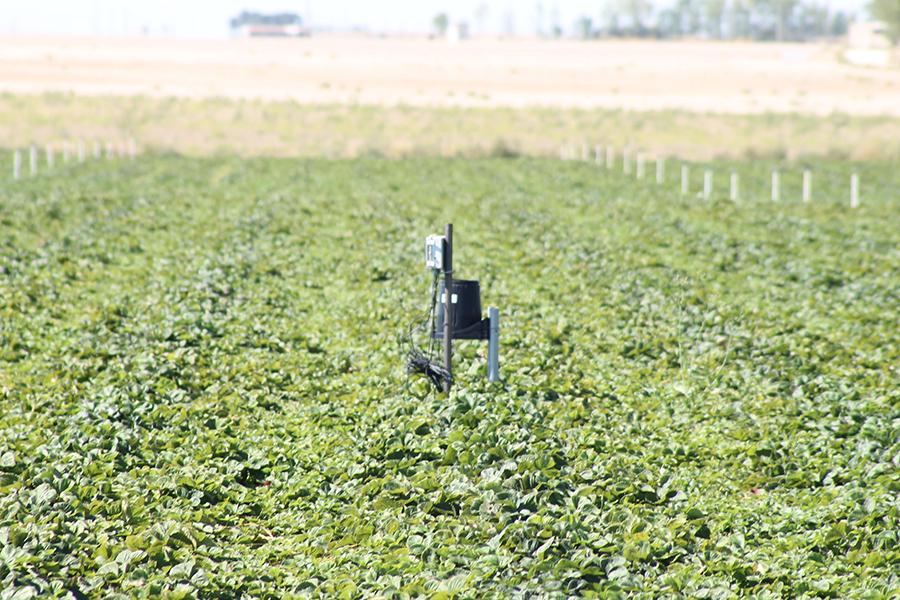 Grufesa avanza en el conocimiento de su huella hídrica y controla el agua empleada en viveros