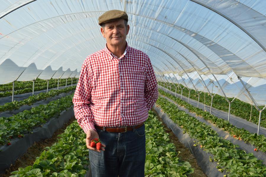 """Jiménez: """"El cultivo de fresas me llena y sigo la evolución de cada mata como si fueran mis hijas"""""""