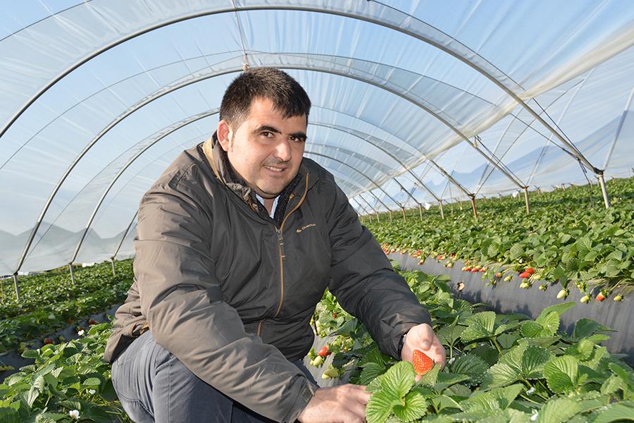 """Luis Miguel Ollero: """"Espero jubilarme en mi campo, con mis fresas"""""""