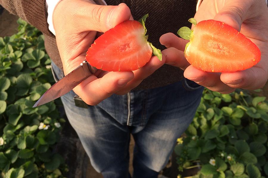 3, 2, 1… ¡Grabando!: Las fresas de Grufesa aparecen en 'Salud al Día'