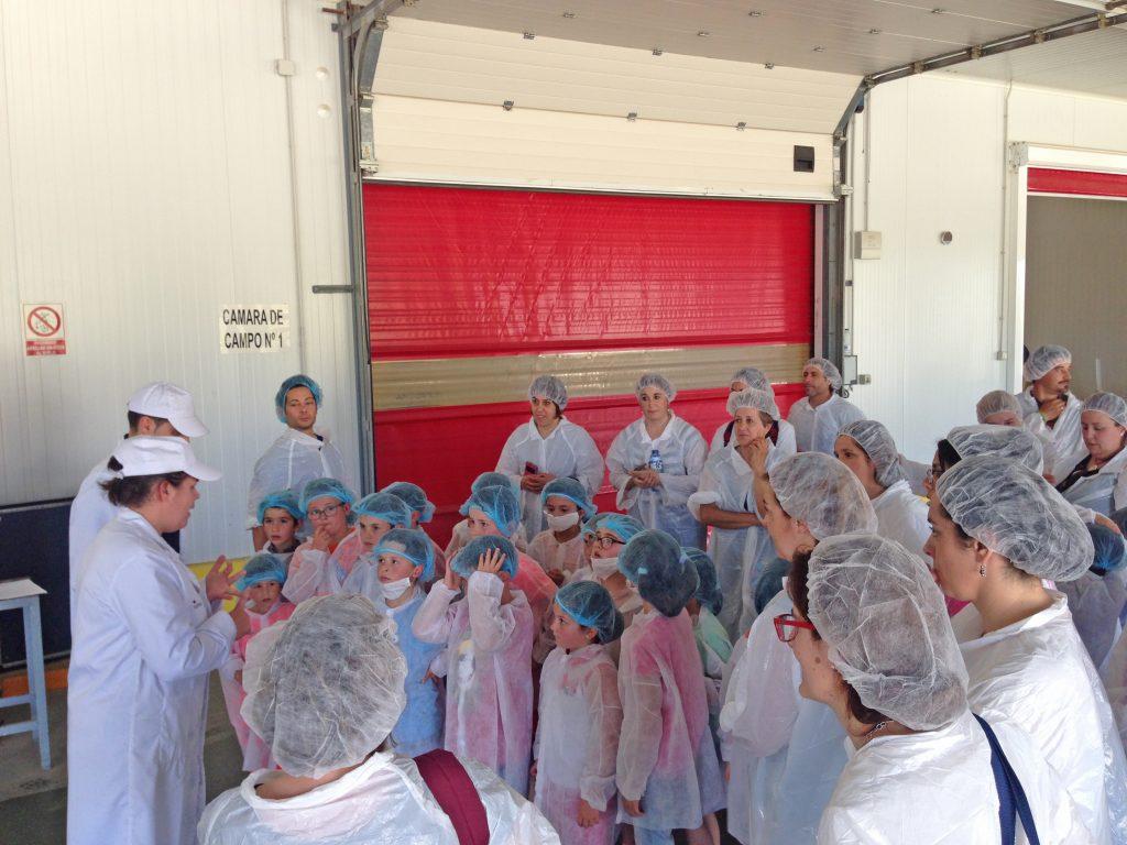 Grufesa enseña el cultivo de la fresa a los alumnos de Primaria del colegio José Nogales de Aracena
