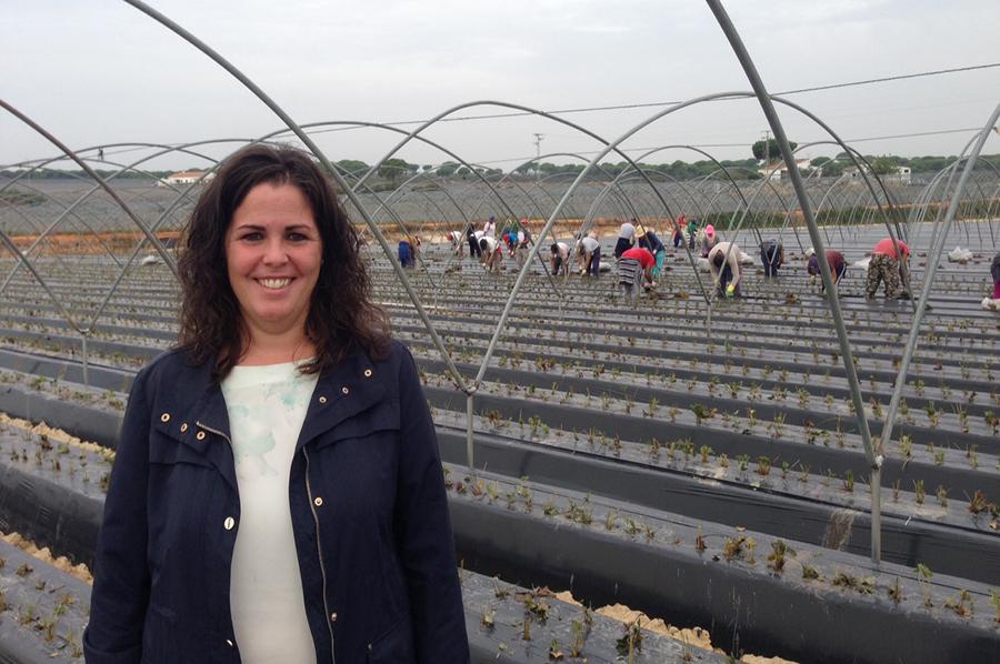 Grufesa ultima en Moguer el proceso de plantación de la fresa