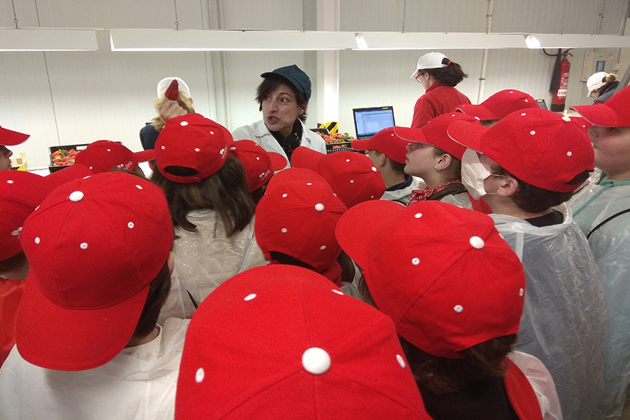 Students learn to value the efforts and sacrifices of the strawberry sector in a visit to the Grufesa facilities
