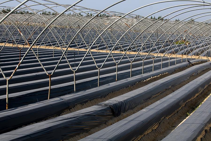 Los socios de Grufesa acondicionan el terreno para la siembra de la producción de la próxima campaña