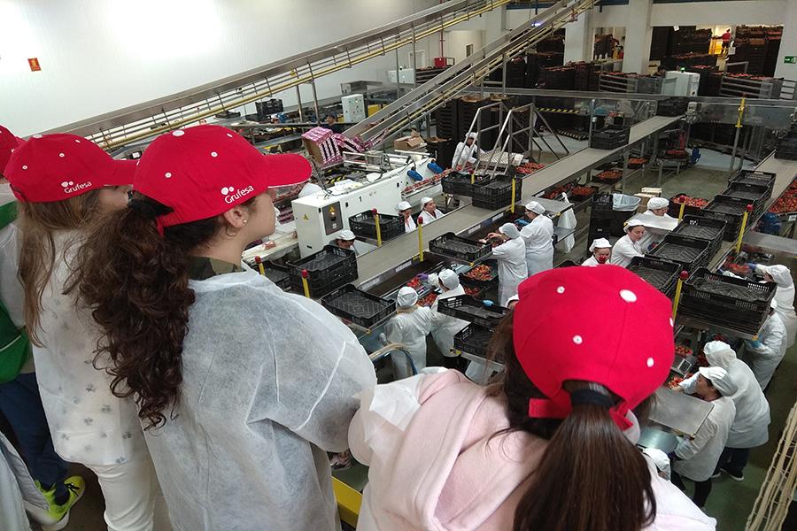 Escolares de Moguer visitan las instalaciones de Grufesa para aprender a valorar el esfuerzo y sacrificio que hay detrás del sector de la fresa