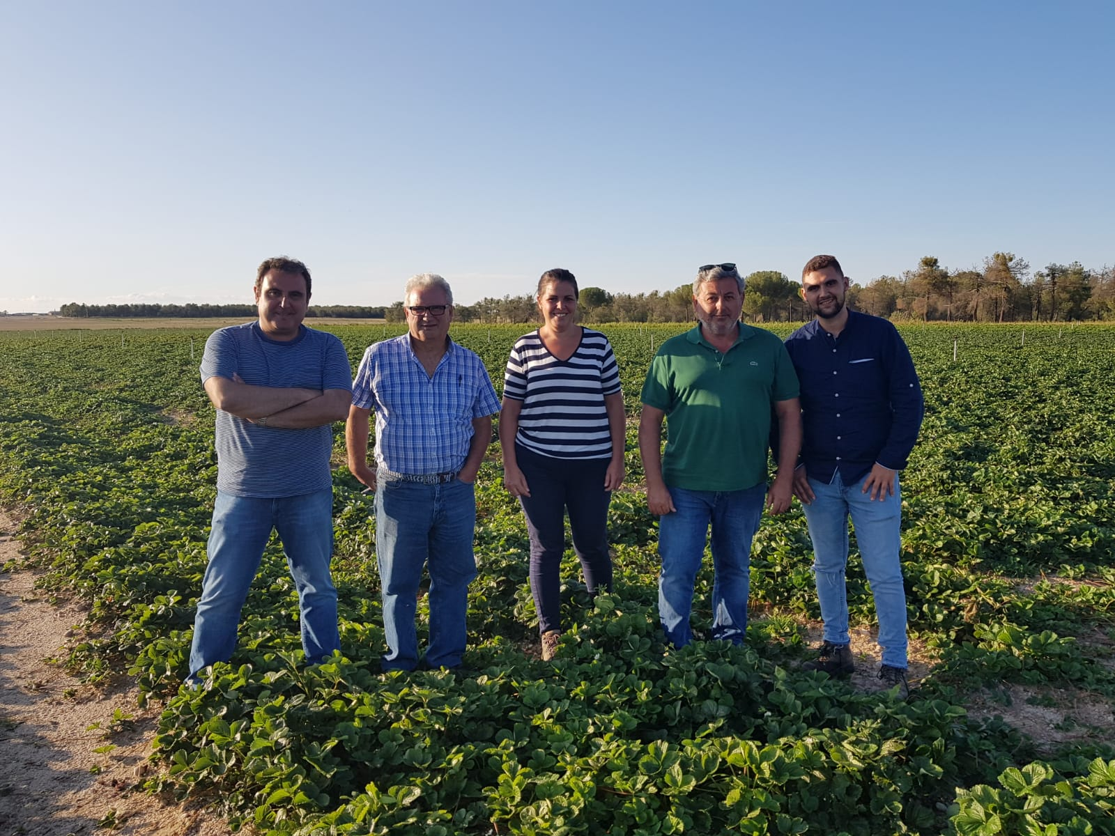 Grufesa avanza en la recogida de las primeras plantas de fresas de sus viveros de Ávila para su siembra en Moguer